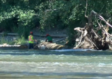 Dangerous tree removed from Puntledge River in Courtenay
