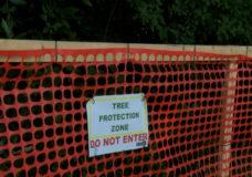'It's heartbreaking:' Nearly 100 trees mistakenly cut down in Saanich