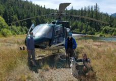 Campbell River SAR members along with Grizzly Helicopters, who went out on their expense, were able to locate the hiker and her injured dog along six-kilometres down a trail called Flower Ridge Trail at an elevation of about 1,250 metres.