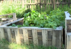 One of curbside garden's boxes in Victoria.