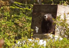 Foundation keeping close tabs on wildfire near Nanaimo due to marmots