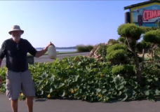 CHEK Upside: Sidney hotel transforms land into vegetable garden to feed those in need