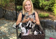 Pet CHEK: Celebrating our one year anniversary with 'Lucky 7' kittens