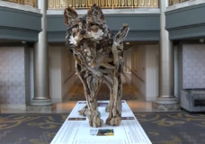 CHEK Upside: Victoria driftwood artist creates 'larger than life' tribute to Takaya the wolf