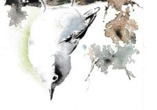 "Let's Paint ""Nuthatch"" - ONLINE"
