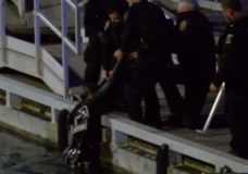 Man removed from Victoria's Inner Harbour arrested on outstanding warrants