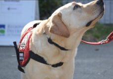 Vancouver Island Compassion Dogs can't keep up with demand amid COVID-19 pandemic