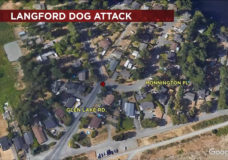 RCMP capture large dog after it attacked woman, small child in Langford