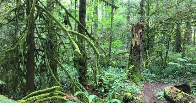 New provincial park to be created on Vancouver Island to protect vital ecosystem