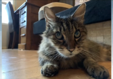 'A little overwhelming': Nanaimo cat missing for over three years reunited with its family