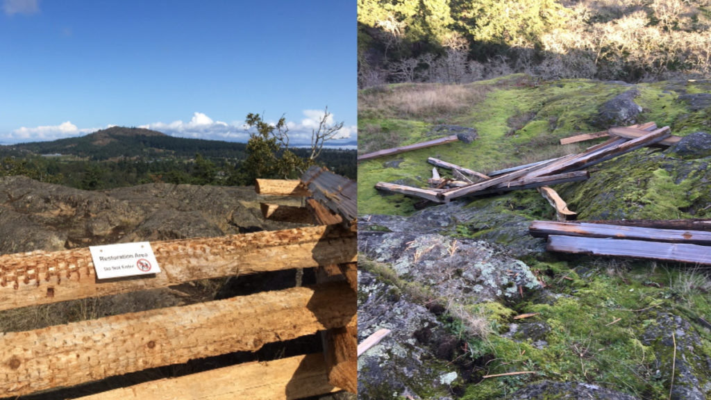 The fence before, and after, it was dismantled over the weekend at the Swan Lake Nature Sanctuary