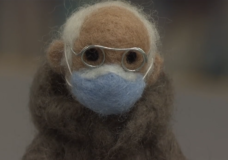 CHEK Upside: Victoria woman hopes to raise funds for charity with help from 'felted Bernie'