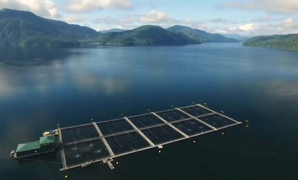 Fish farms and conservationists tussle over transfers in court