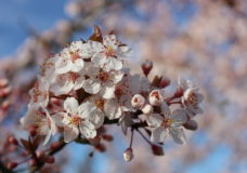 Greater Victoria's annual flower count set to bloom for another year