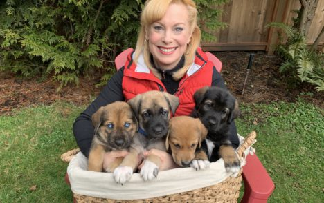 Pet CHEK: Ten adorable puppies from the 'Ski Hill Litter' need forever homes