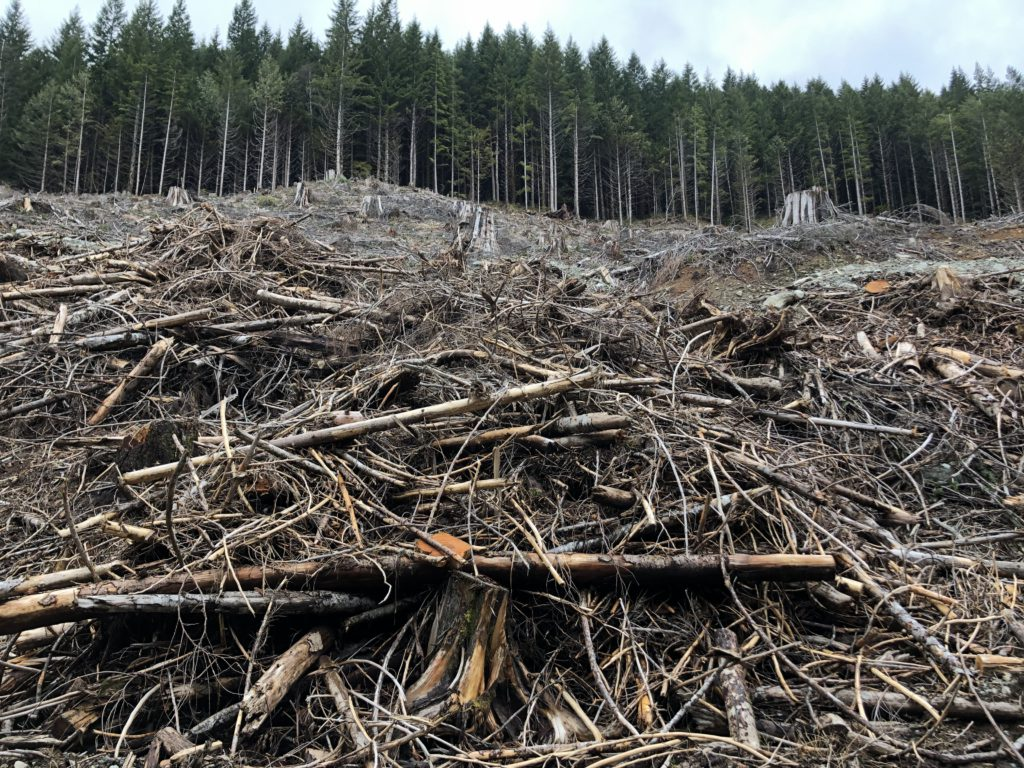 Opinion: British Columbians deserve more than continued delays and deflection on old growth