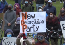 Hundreds gather to protest old-growth logging, forestry industry worries about loss of jobs