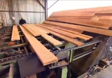 New sawmill opens in Port Alberni as lumber demand soars