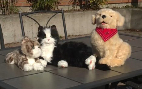 Eldercare Foundation campaign aims to bring 'companion pets' to seniors