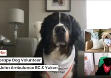 CHEK Upside: St. John Ambulance holding virtual therapy dog sessions