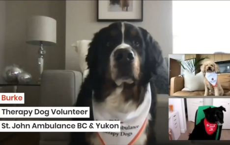 CHEK Upside: St. John Ambulance holding virtual therapy dog sessions