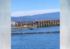 'Something that I haven't witnessed before': Transient orcas hunt in French Creek Harbour