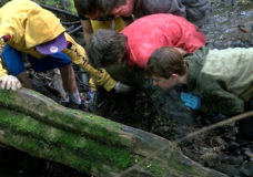 Central Saanich elementary school students conduct creek cleanup in bid to save salmon