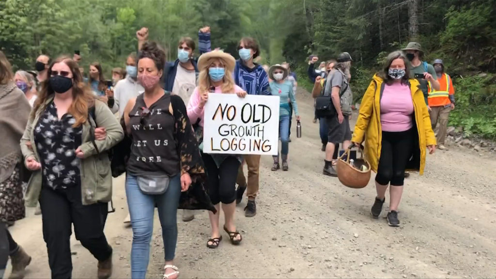 RCMP say Fairy Creek activists cut 18 trees to block vehicle access