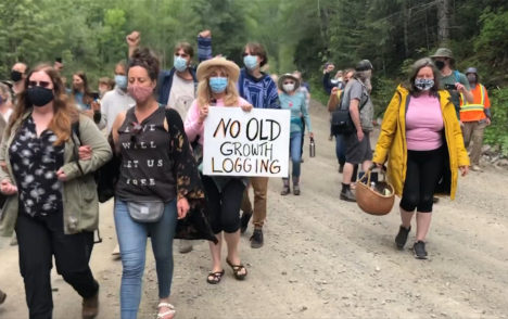 Judge rules against extending injunction on old-growth blockades at Fairy Creek
