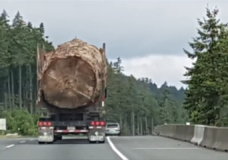 Here's the story behind that viral picture of an old-growth log on the back of a truck
