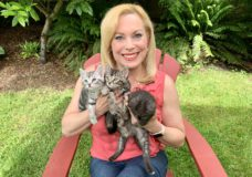 Pet CHEK: Distinctive silver and charcoal tabbies need homes