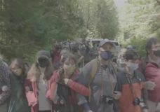 Dozens of old-growth logging protesters go through police line