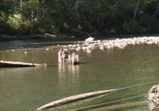Vancouver Island rivers and creeks will slow as dry weather continues