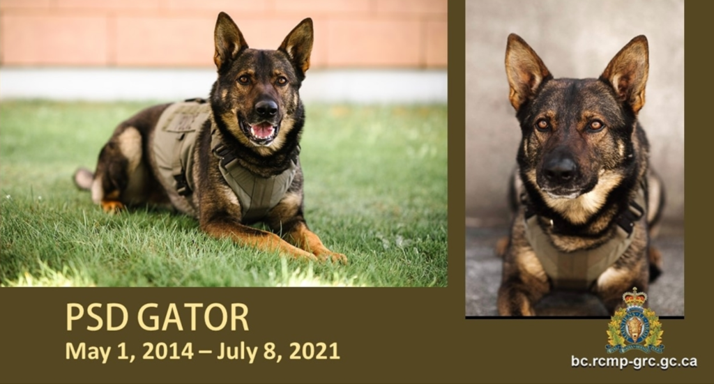 Memorial grows for Gator, police dog killed in Campbell River incident