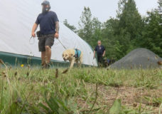 CHEK Upside: Service dog training centre celebrating one year of helping veterans with PTSD