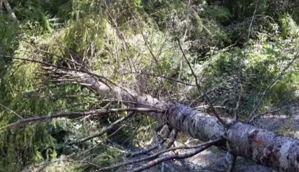 Pacheedaht First Nation condemns Fairy Creek protesters cutting trees to slow police