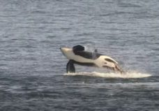 Endangered orcas spotted in Salish Sea after more than 100 days without a sighting