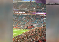 Lucky cat: Falling feline gets saved at Miami football game