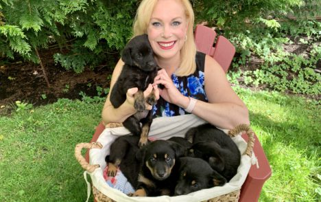 Pet CHEK: The look-alike puppies of the 'Ditto Litter'