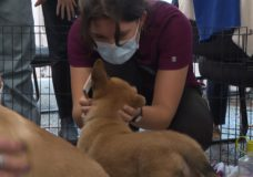 Victoria Humane Society hosts puppy cuddle event for healthcare workers and staff