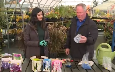 Get Up and Grow: Planting prepared hyacinth for indoor growing