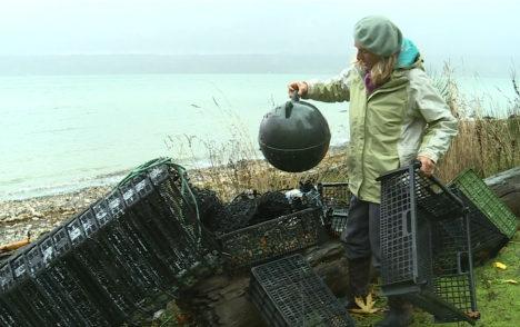 Volunteer says storms will bring more shellfish-growing debris to Denman Island's shores